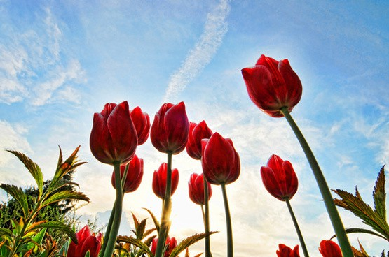 Facts About Flowers: 12 Amazing Facts
