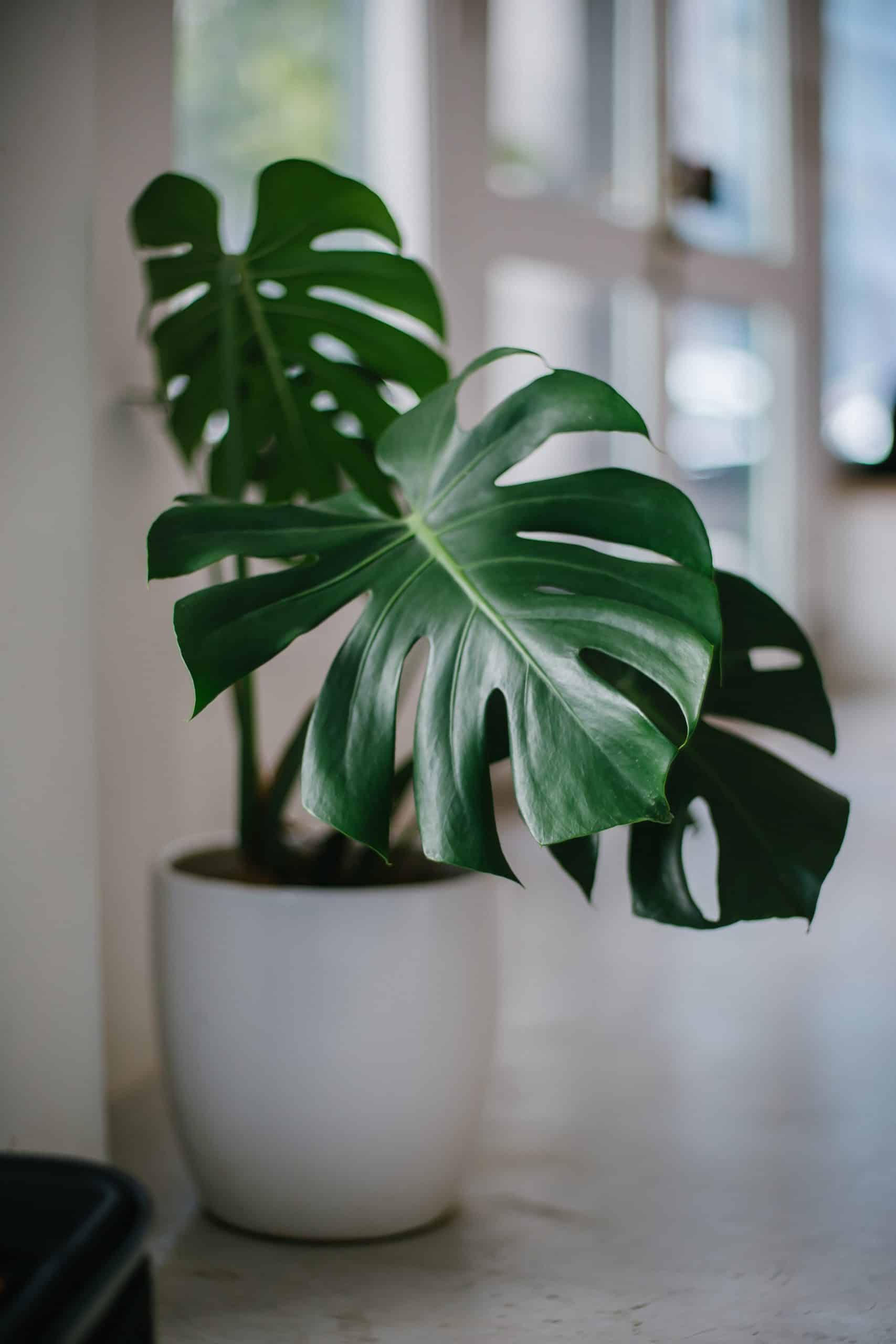 4 Beautiful Indoor Plants To Decorate Your Home