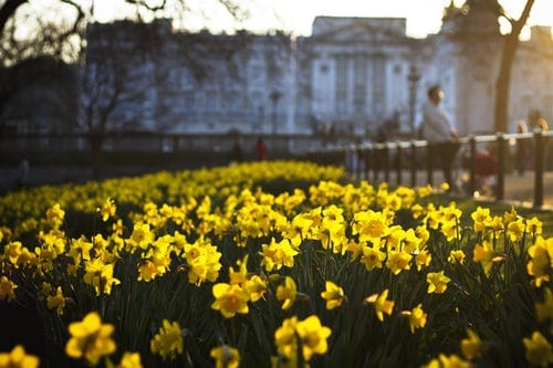 Eleven Common Types of Daffodils