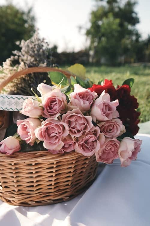 Top Reasons For Planting a Rose Garden