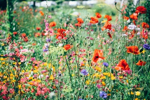 Plant A Wild Flower Meadow Garden