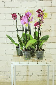 Points To Keep In Mind To Grow Orchid In A Pot