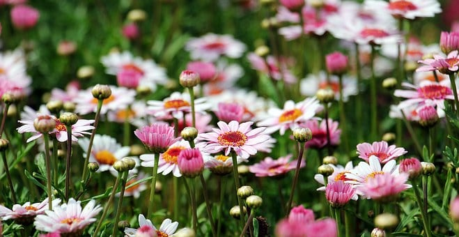 15 Flower Garden Designs And How To Start One