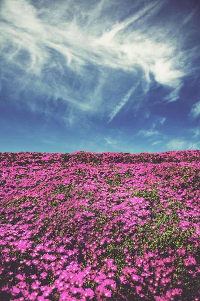 Colorful Blooms Sprout Across the World's Driest Desert