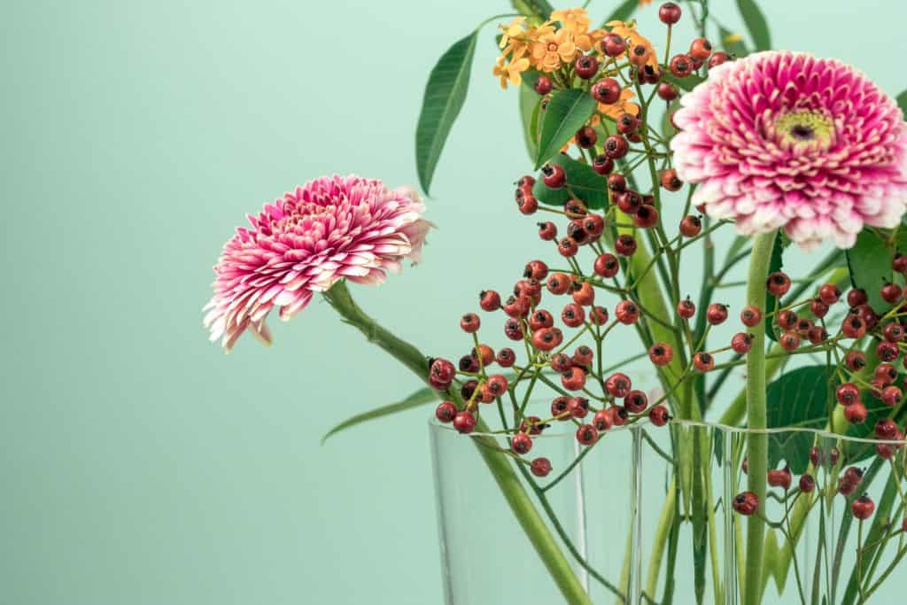 5 Secret Ways Plants Can Benefit You