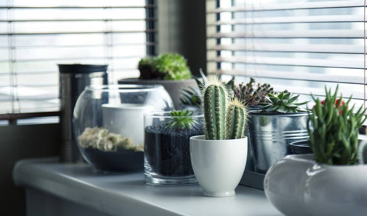 3 Factors To Consider When Choosing Plant Pots