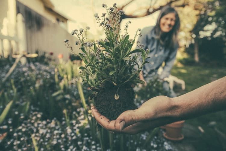 Gardening Is Helping To Fight Depression – Essentials You Need To Know