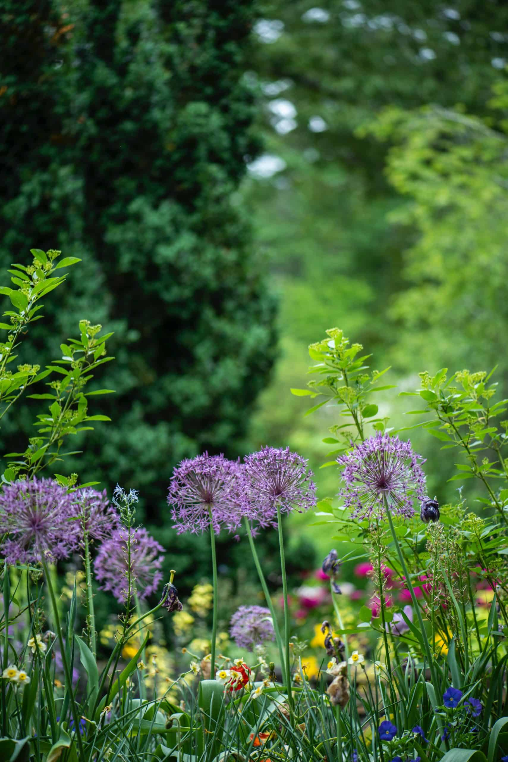 The Benefits Of Garden That We Are Not Aware Of