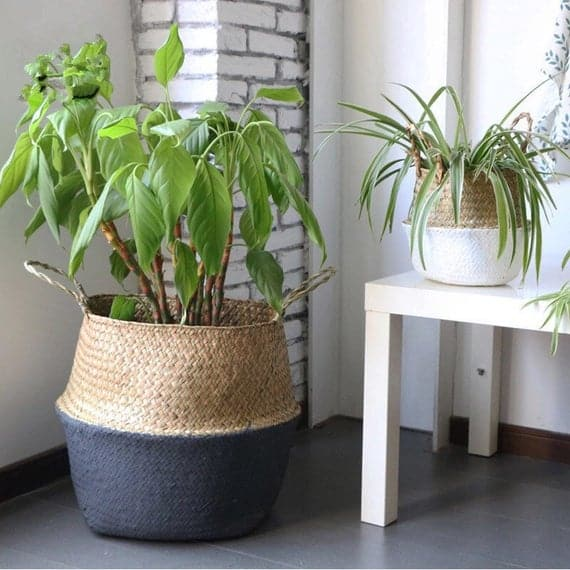 The Plant Pots Are The Best Decorators Of Outdoors And Indoors!