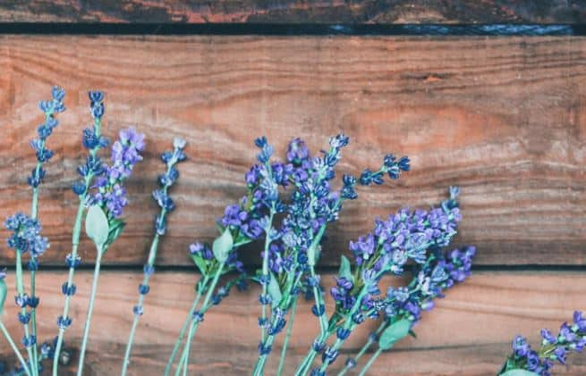 The Best Scented Flowers For Your Garden