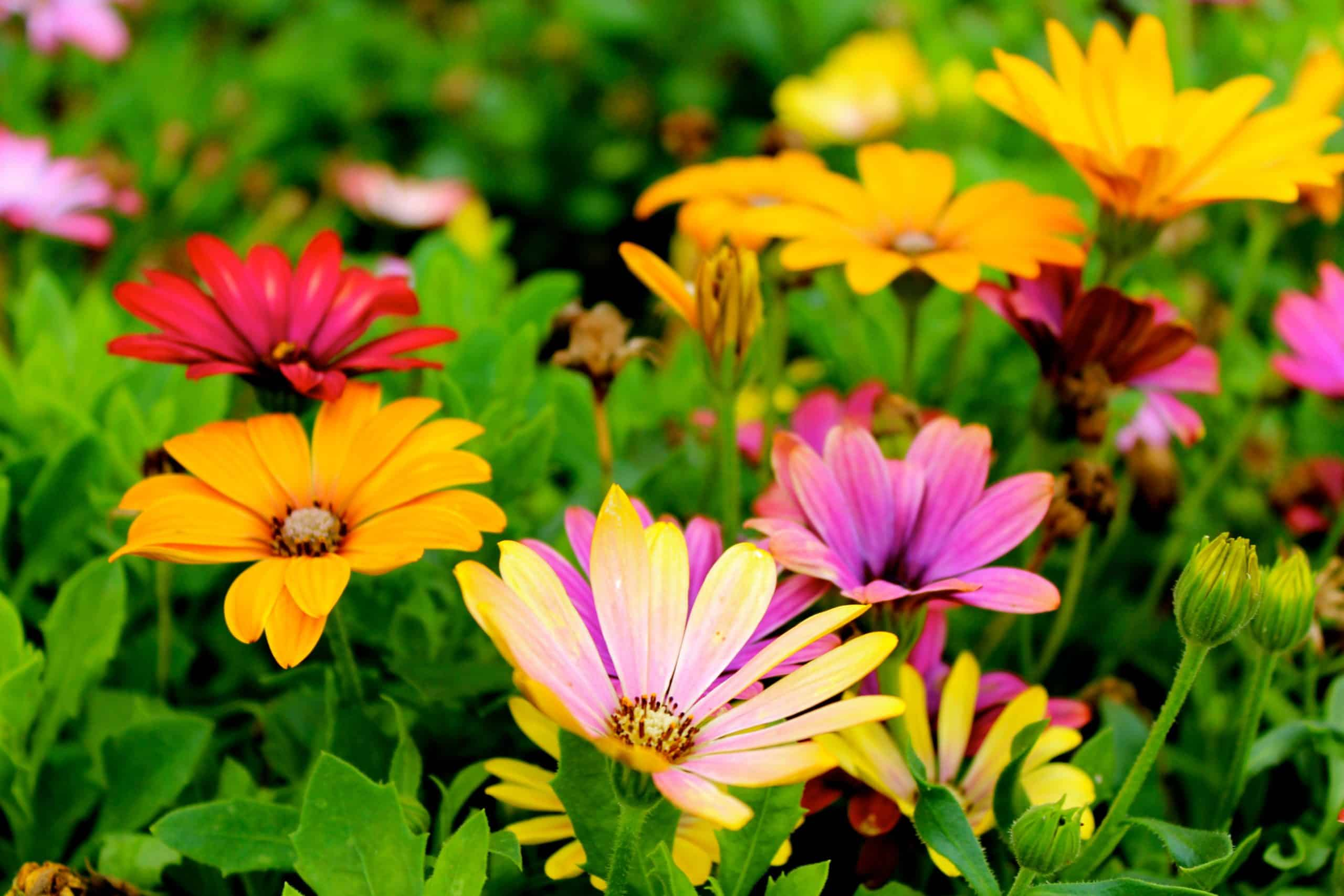 What Kind Of Flower Is The Best For A Garden?