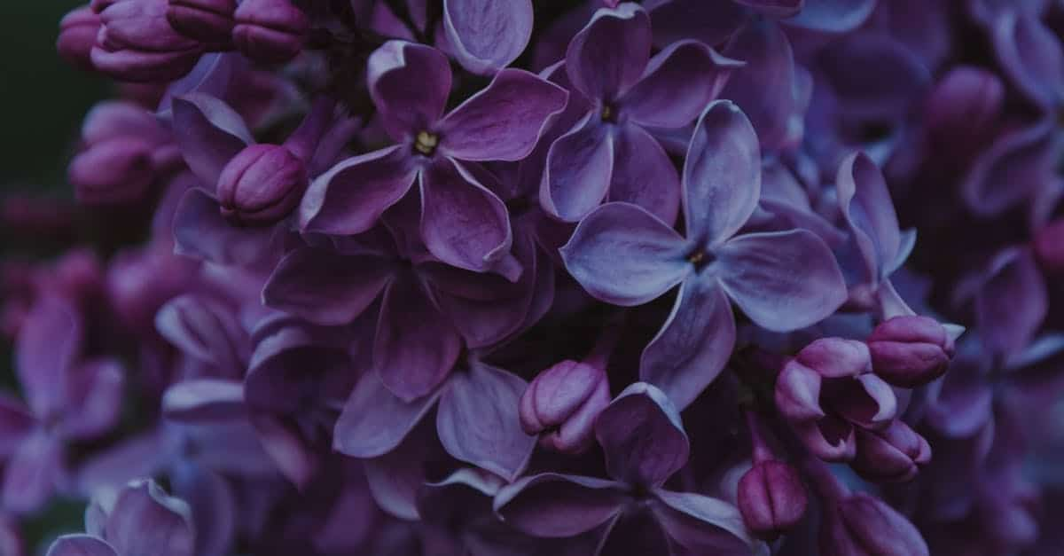 A close up of a purple flower