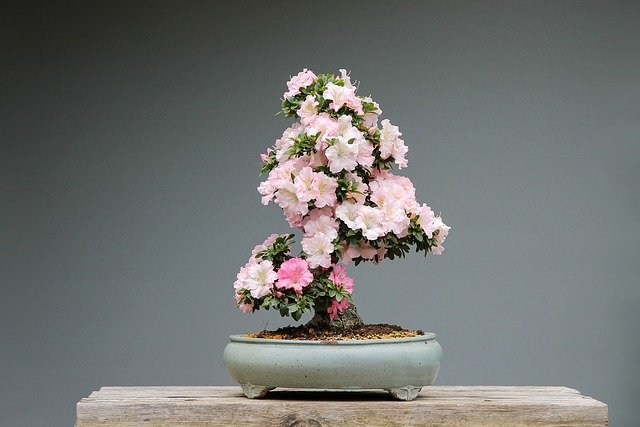 A vase filled with pink flowers on a table